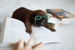 Cachorros recién nacidos del pequeño ridgeback lindo Fotografía de archivo libre de regalías