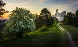 Cachtice slott, Slovakien under solnedgång med en bana som leder till slotten royaltyfria bilder