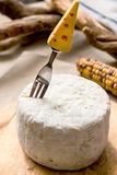 Caciotta whole cheese with funny fork over it Stock Image