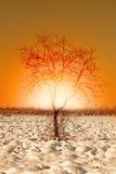 Caco tree in winter Stock Photo