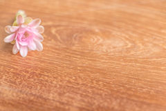 Cactaceae flower. On the wooden background Royalty Free Stock Photo
