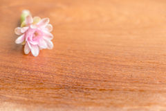 Cactaceae flower. On the wooden background Stock Photos
