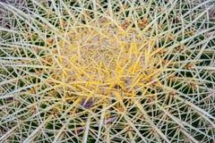 Cactaceae Stock Photo