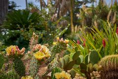 Cactaceae, Marimurtra Botanical garden in Blanes, Catalonia. Photo of Cactaceae, Marimurtra Botanical garden in Blanes, Catalonia stock image