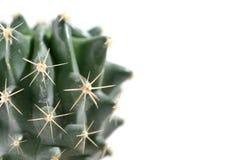 Cactaceaemakro Arkivbilder
