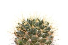 Cactaceaemakro Arkivfoto