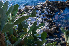 Cactacee - a view with rocks and sea Stock Photo