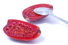 Cactaceous fig Stock Photos