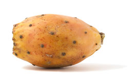 Cactaceous fig isolated on white background. Macro photo royalty free stock photos