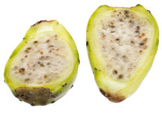 Cactaceous Fig Prickly Pear Stock Photos