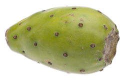 Cactaceous Fig Prickly Pear Royalty Free Stock Photos