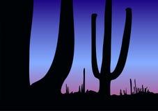 Cacti Stock Photography