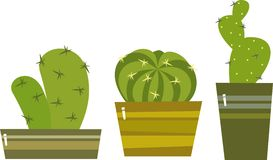 Cacti Royalty Free Stock Photos