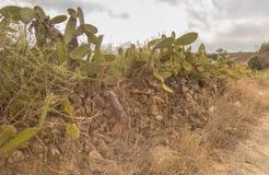 Cacti along the way. Survival in a hot environment stock photo