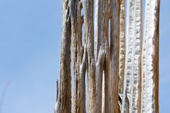 Cactus, American Western Desert Landscape. Cacti. American western desert landscape with cactus detail stock photos