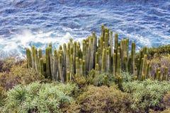 Cacti and Atlantic Ocean Stock Photos