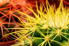 Cacti background Royalty Free Stock Image