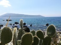 Cacti on the background of the sea and mountains. Stock Image