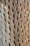Cacti Bark Texture Royalty Free Stock Image