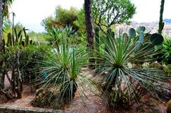 Cacti in the Botanical Garden of Monaco ,France Stock Photo