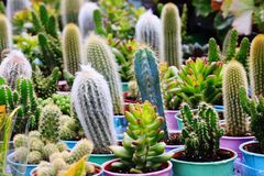 Free Cacti Cactus And Succulents Stock Photos - 122320243