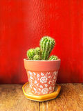 Cacti cactus plant in flower pot Stock Images