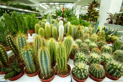Cacti Stock Images