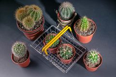 Cacti collection on dark background. Low key lighting royalty free stock photography