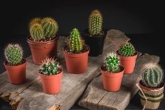 Cacti collection on dark background. Low key lighting stock images