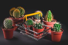Cacti collection on dark background. Low key lighting royalty free stock photos