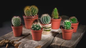 Cacti collection on dark background. Low key lighting royalty free stock images