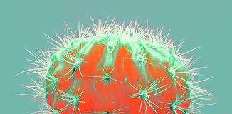 Free Cacti Colorful Fashionable Mood. Trendy Tropical Neon Cactus Plant On Green Color Background. Stock Photography - 149451432