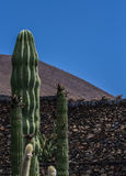 Cacti columns. The pillars of cacti stand in the blue sky Royalty Free Stock Photo