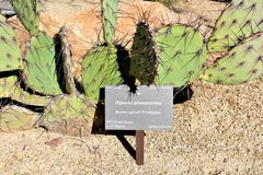 Desert Botanical Garden Phoenix Arizona. Cacti at the Desert Botanical Garden during the winter located in Phoenix Arizona Royalty Free Stock Images