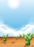 Cacti in the desert Stock Images