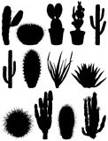 Set cacti. Stock Images