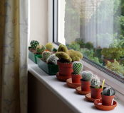 Cacti display Stock Photos