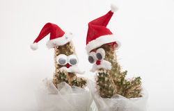 Cacti. In the form of Santa Claus Royalty Free Stock Images