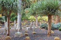 Cacti garden Royalty Free Stock Photos