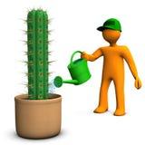 Cacti Gardener Stock Photos