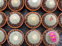 Cacti grow house - detail Stock Image