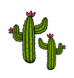 Cacti illustration. Isolated cactus illustration; Freehand drawing Royalty Free Stock Photography