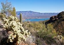 Cacti and Lake Roosevelt Royalty Free Stock Image