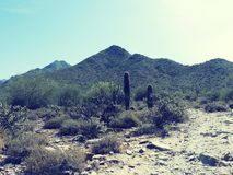 Brothers. Cacti in the middle of picture are brothers Royalty Free Stock Photos