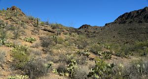 Cacti, mountains and valleys in the Arizona Sonoran Desert. West of Tucson Royalty Free Stock Photography