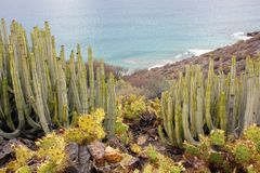 Various cactus species and the ocean royalty free stock images