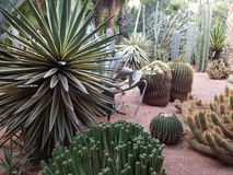 Cacti and other southern plants in Majorelle garden. Morocco, Marrakesh stock photo
