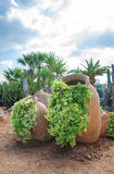 Cacti and palm. Royalty Free Stock Image