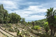 Cacti and palm trees on the hillside, against the sea horizon. Summer landscape Stock Photo