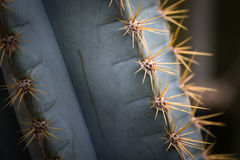 Cacti. This is a photo of some kinds of cacti, was taken in Xiamen botanical garden ,China Royalty Free Stock Photos